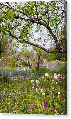 Texas Roadside Wildflowers 732 Canvas Print