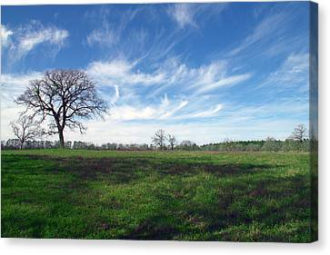 Texas Sky Canvas Print by Brian Harig