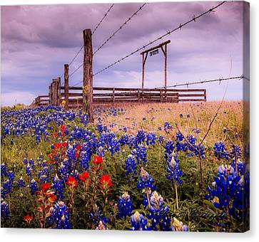 Texas Spring Fence Canvas Print by Allen Biedrzycki