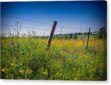 Texas Spring Fling Canvas Print by Allen Biedrzycki