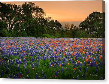 Canvas Print featuring the photograph Texas Sunset - Bluebonnet Landscape Wildflowers by Jon Holiday