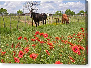 Texas Twosome Canvas Print by Lynn Bauer