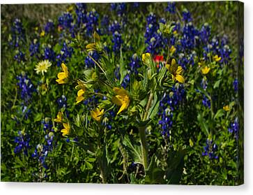 Texas Wildflowers Canvas Print by Kelly Kitchens