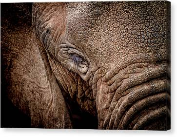 Texture Collection Canvas Print by Mike Gaudaur