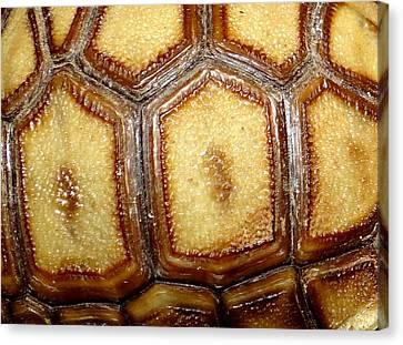 Texture Tortoise Shell Canvas Print