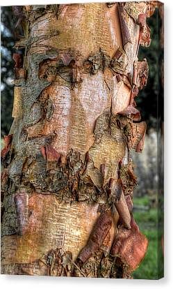 Textured Bark Canvas Print by Gill Billington