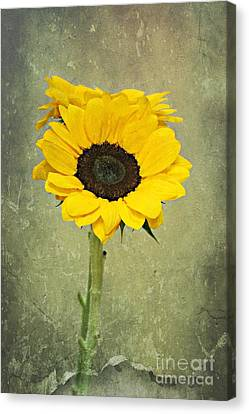 Textured Beauty Canvas Print by Clare Bevan