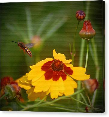 Canvas Print featuring the photograph Textured Bee by Leticia Latocki