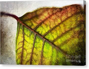 Textured Leaf Abstract Canvas Print by Scott Pellegrin