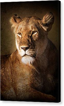 Canvas Print featuring the photograph Textured Lioness Portrait by Mike Gaudaur