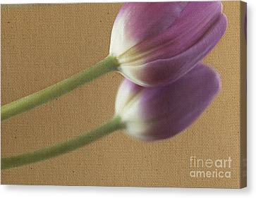 Textured Purpletulip Canvas Print by Eden Baed