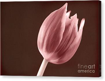Textured Sepia Tulip Canvas Print by Eden Baed
