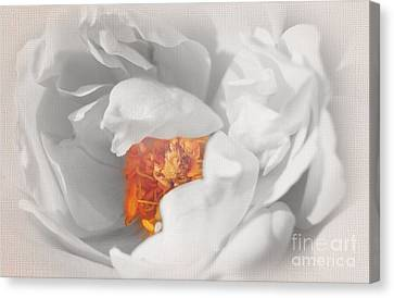 Textured Summer Rose Canvas Print by Eden Baed