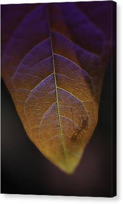 Thailand Jungle Ants Canvas Print by David Longstreath