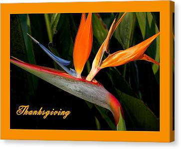 Thanksgiving Card Bird Of Paradise Canvas Print by Rosalie Scanlon