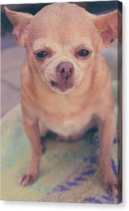 Tiny Dogs Canvas Print - That Little Face by Laurie Search