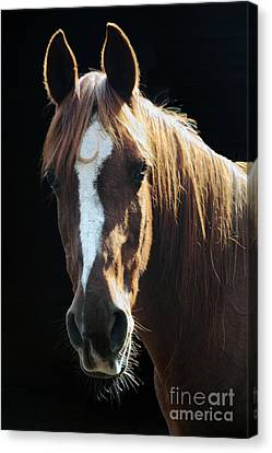 Flame - Will Be Missed Canvas Print