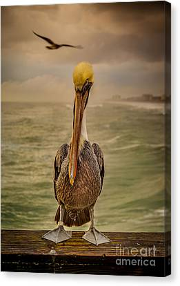 That's Mr. Pelican To You Canvas Print