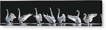 The 7 Swans Canvas Print