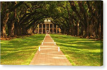 Canvas Print featuring the photograph The Alley Of Oaks by Photography  By Sai