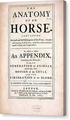 Appendix Canvas Print - The Anatomy Of An Horse (1683) by National Library Of Medicine