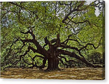 The Angle Oak Canvas Print