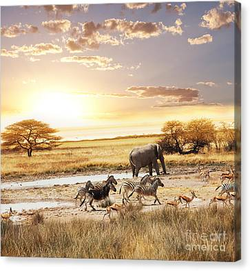 The Animals In Safari Canvas Print by Boon Mee
