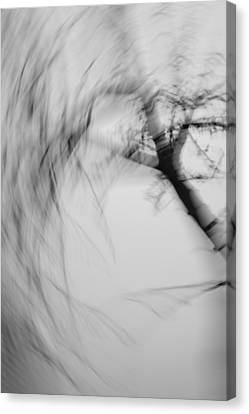 Wind Blown Tree Canvas Print - The Answer by Catherine Lau