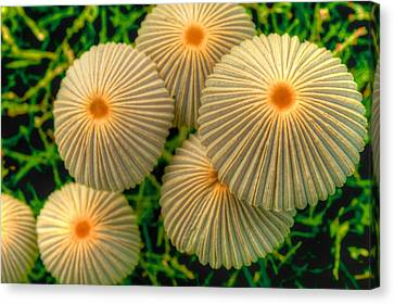Canvas Print featuring the photograph The Ants Raised Their Umbrellas by Dennis Baswell