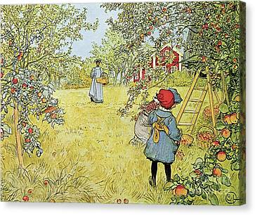 Picking Canvas Print - The Apple Harvest by Carl Larsson