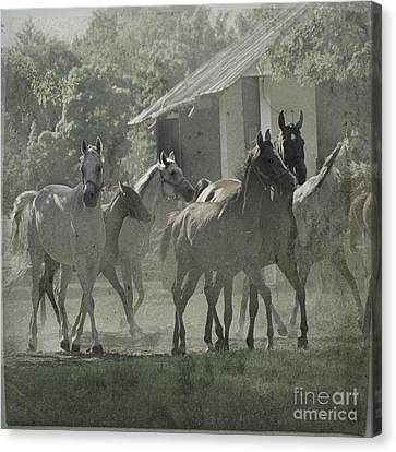 The Arabian Horses Fairytale Canvas Print by Angel  Tarantella