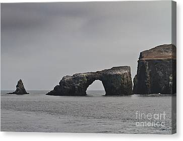 The Arch At Anacapa Island Canvas Print by Mitch Shindelbower