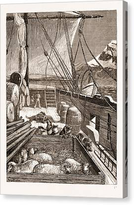 The Arctic Expedition Esquimaux Dogs On The Deck Canvas Print by Litz Collection