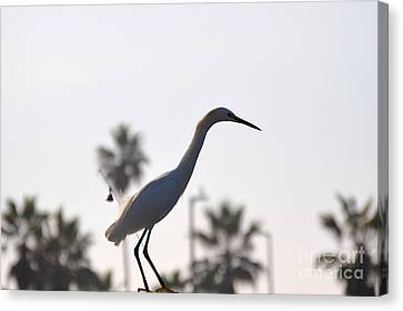 Canvas Print featuring the photograph The Art Of Fishing by Laurie L