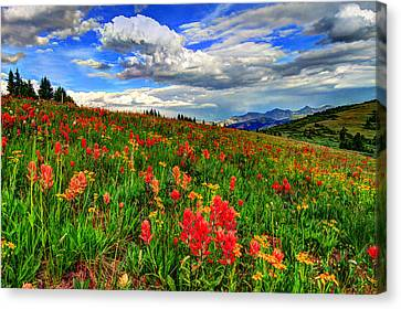 The Art Of Wildflowers Canvas Print by Scott Mahon