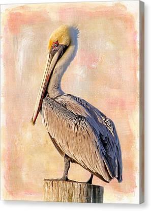 Birds - The Artful Pelican Canvas Print