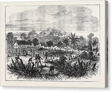The Ashantee War The Battle-field Of Abrakrampa 1874 Canvas Print
