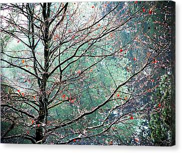 The Aura Of Trees Canvas Print by Angela Davies