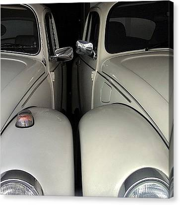 The Authentic Love Bugs Canvas Print by Carlos Alkmin
