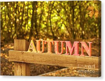 The Autumn Canvas Print by Amanda Elwell