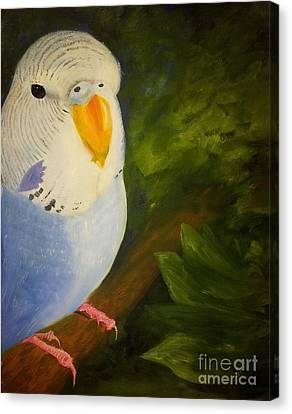 The Baby Parakeet - Budgie Canvas Print