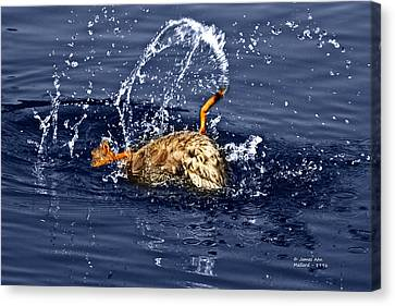 The Backstroke - Mallard Canvas Print by James Ahn