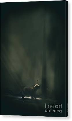 The Bark Canvas Print by Margie Hurwich