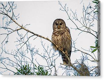 Canvas Print featuring the photograph The Barred Owl by Phil Stone