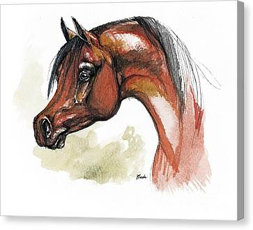 The Bay Arabian Horse 15 Canvas Print by Angel  Tarantella