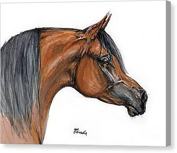 The Bay Arabian Horse 18 Canvas Print by Angel  Tarantella