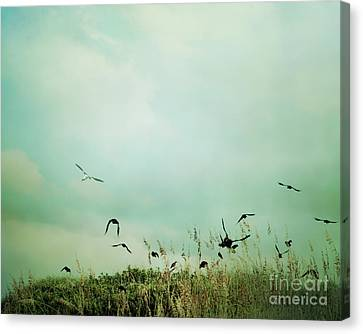 The Beautiful Flight Canvas Print by Sharon Coty