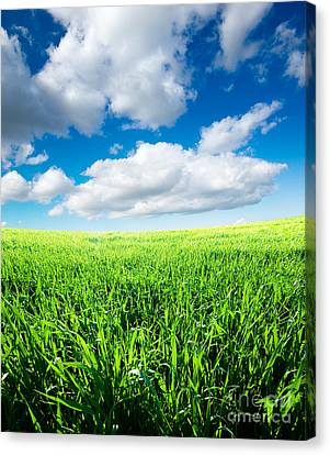 The Beautiful Greens Landscape Canvas Print by Boon Mee