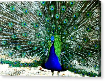 Canvas Print featuring the photograph The Beautiful Plumage by Kathy  White