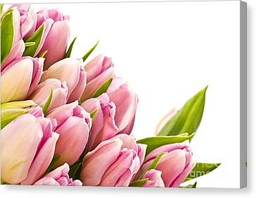The Beautiful Purple Tulips Canvas Print by Boon Mee